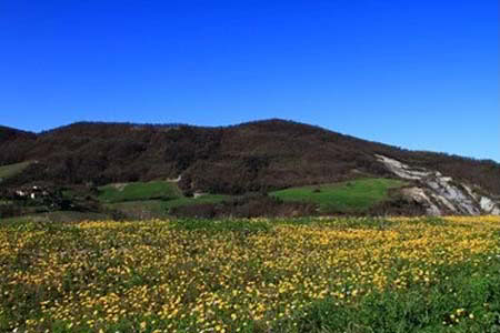 campo agricolo campagna pavia