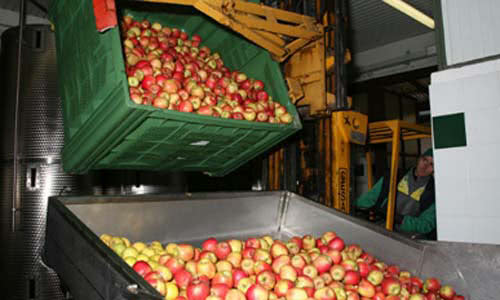 Azienda Agricola Simonini's apples in processing