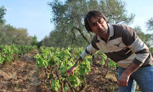 Cantine Polvanera's owner in the field