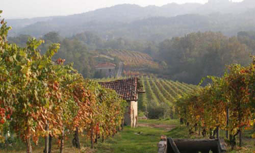 View of Le Piane's vineyard