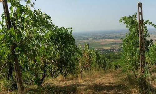 view of La Travaglina's vineyard