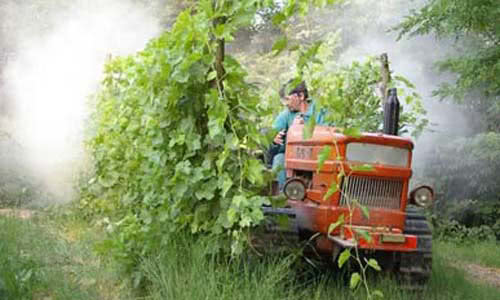 winegrowers working in the vineyard