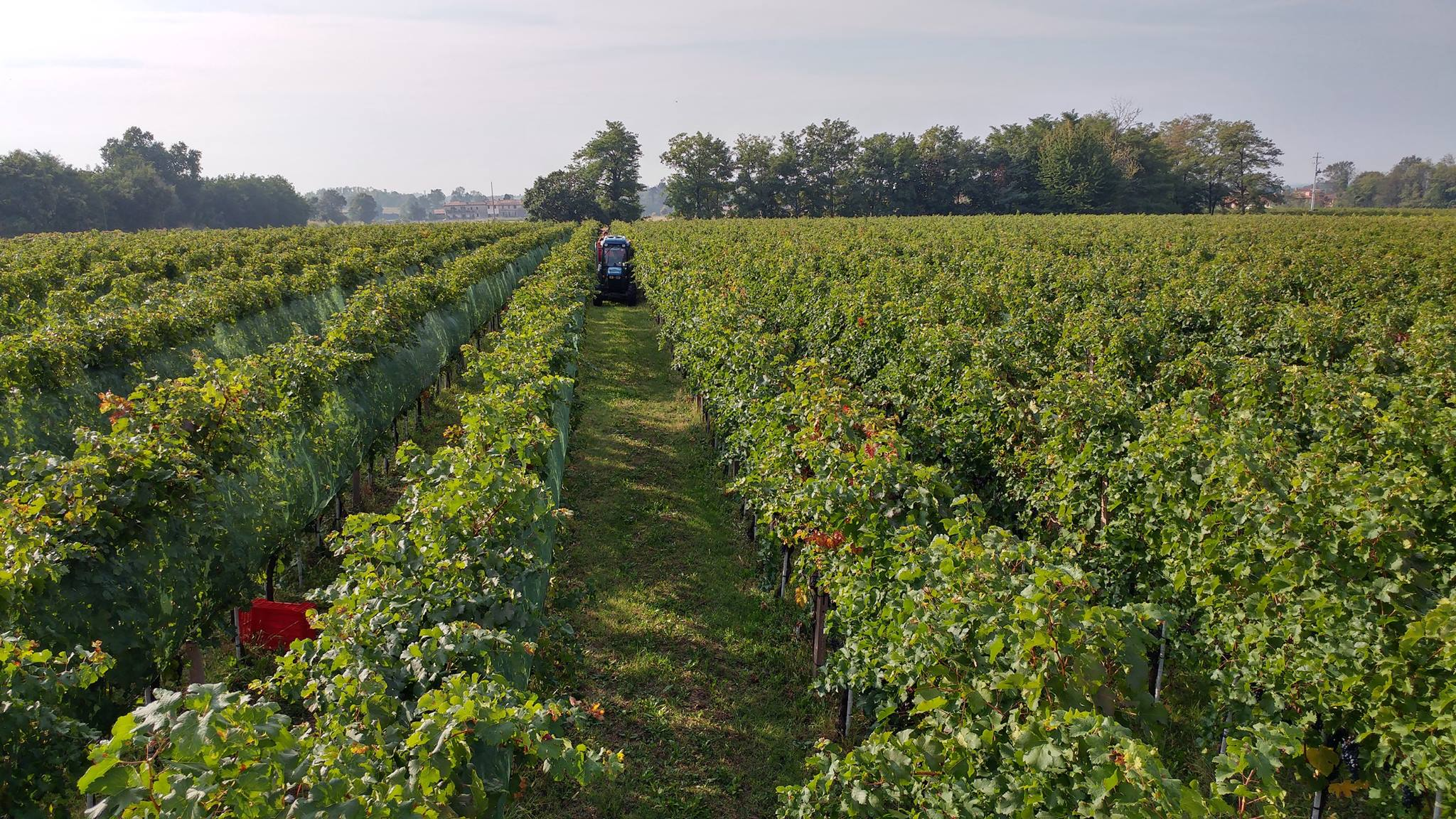 Cantine del Barone's vineyard