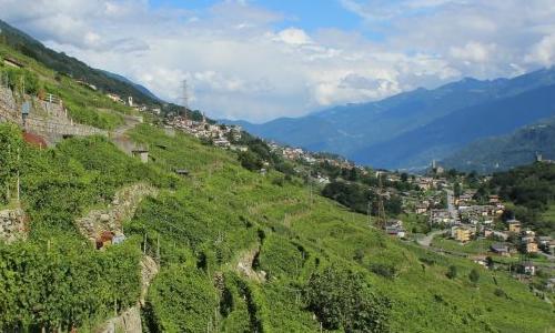 uomo e donna produttori di vino